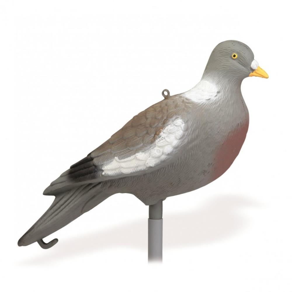 Pigeon sans pattes